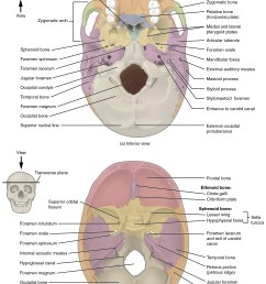 this image shows the superior and inferior view of the skull base in the top [ 2283 x 3096 Pixel ]