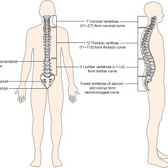 Vertebrae Diagram Blank What Is An Electron Shell 7 3 The Vertebral Column Anatomy And Physiology This Image Shows Structure Of Left Panel Front