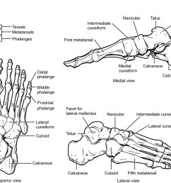 this figure shows the bones of the foot the left panel shows the superior view [ 1119 x 817 Pixel ]