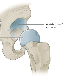 this image shows a multiaxial joint the left panel shows the acetabulum of the hip [ 1791 x 1071 Pixel ]