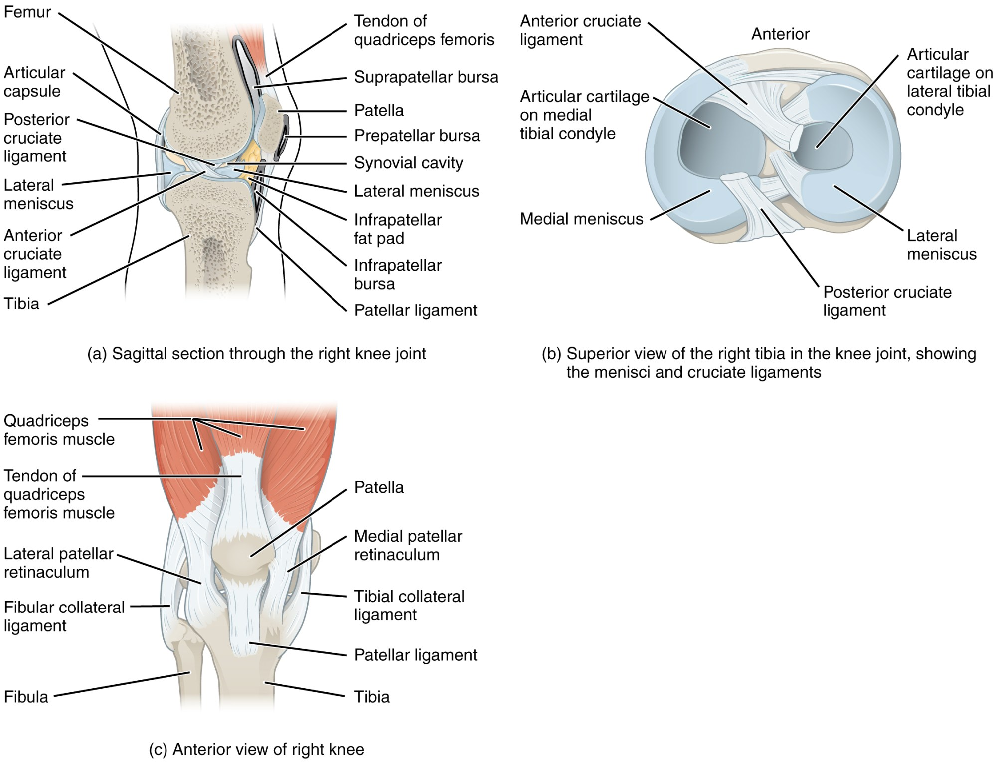 hight resolution of this image shows the different views of the knee joint the top left panel