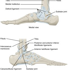 this figure shows the structure of the ankle and feet joints the top panel shows [ 1481 x 1677 Pixel ]