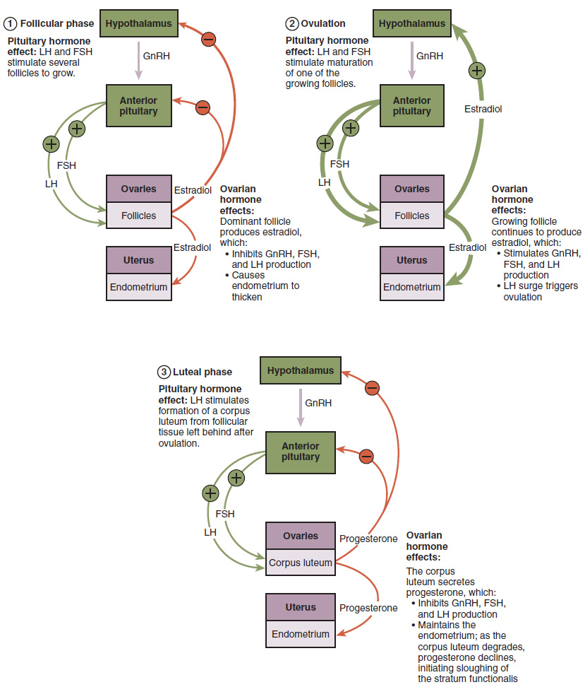 hight resolution of the flowchart on the top left shows the hormonal regulation