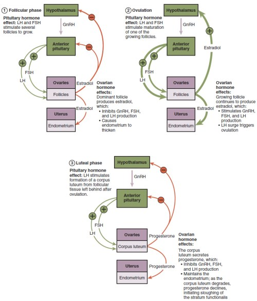 small resolution of the flowchart on the top left shows the hormonal regulation
