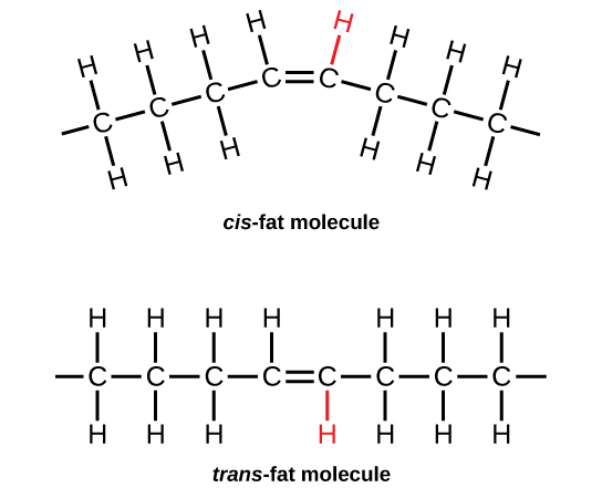 2.3 Biological Molecules