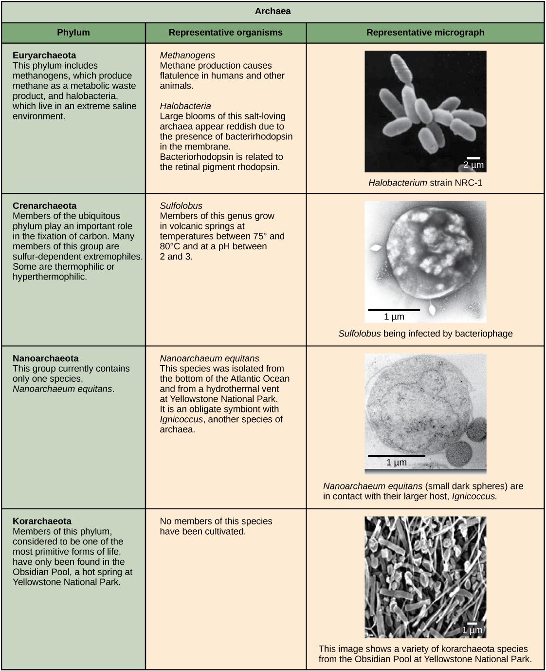 Phospholipid Bilayer Worksheet