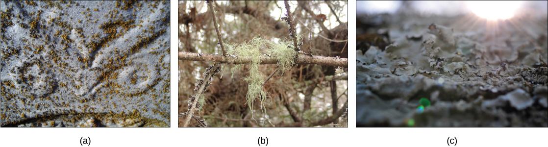 Ecology Of Fungi – Biology 2e