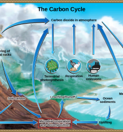 the illustration shows the carbon cycle carbon enters the atmosphere as carbon dioxide gas that [ 2236 x 1557 Pixel ]