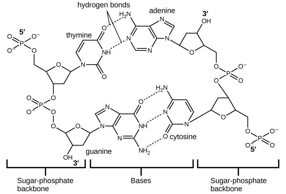 10.1 Intermolecular Forces