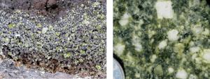 Figura 3.15 texturas porfídico: pórfido volcánica (a la izquierda - cristales de olivino en basalto Hawaiian) y pórfido intrusivo (derecha) [SE]