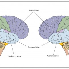 Brain Structures And Functions Diagram Worksheet Cicada Life Cycle 4.2 Our Brains Control Thoughts, Feelings, Behaviour – Introduction To Psychology 1st ...