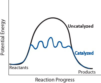 catalyzed vs uncatalyzed reaction mechanism