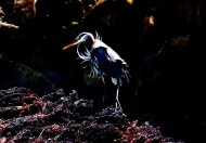 High Contrast Heron