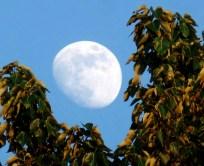 Framed Moon (Karen Molenaar Terrell)