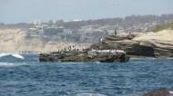 cormorants on a rock