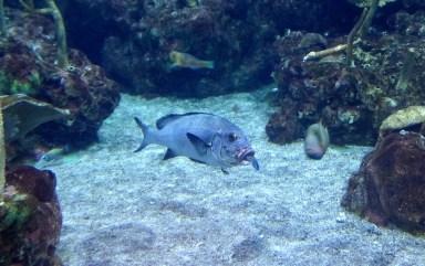 Fish in Fish