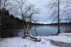 Lake Padden, Bellingham, WA (photo by Karen Molenaar Terrell)
