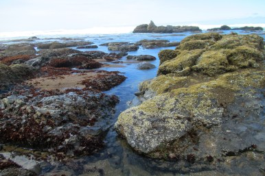 Rocky Shore at Lincoln City