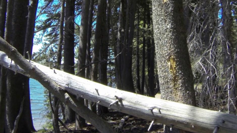 corner pin fallen tree 02