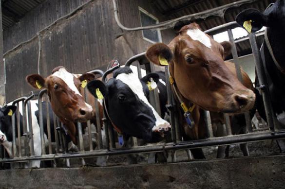 Ученые: сокращение потребления мяса поможет избежать глобальной катастрофы. 397398.jpeg
