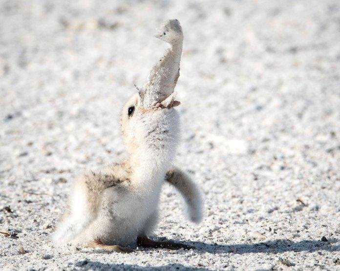 Фото с птенцом, поедающим окурок, заставило пользователей сети задуматься над своим отношением к природе 4