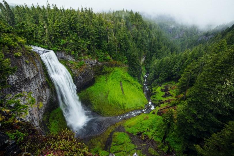 Grande forêt avec cascade.