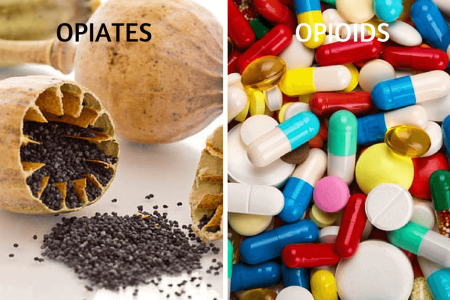 Difference Between Opioid and Opiate: Best Definition You'll Ever Read