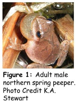 peeper_fig1
