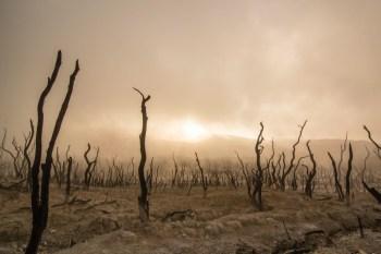 Titelfoto artikel Klimaatgedram bij de NPO wordt steeds erger freek van beetz opiniez