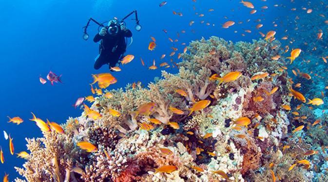 Wakatobi Surganya Para Penyelam Dunia
