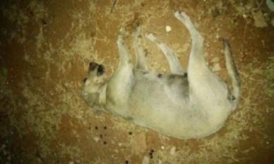 crime-ambiental-800x480-300x180 ONG denuncia envenenamento e morte de 22 animais no Cariri
