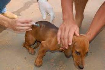 """images-1 Monteiro realiza """"Dia D"""" da Campanha de Vacinação Contra a Raiva Animal"""