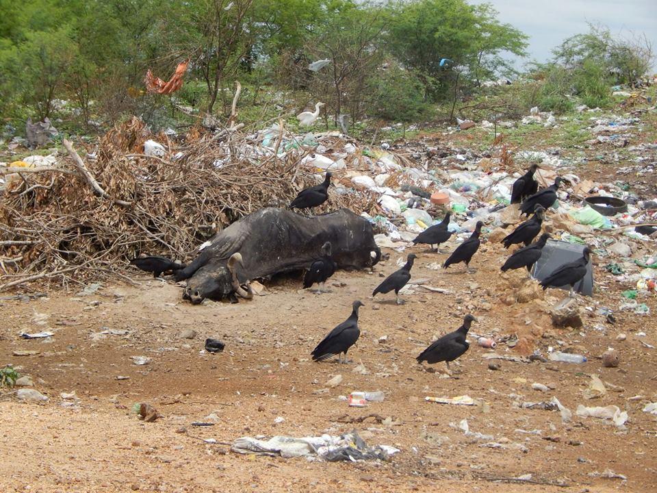 12576025_10206028989586933_939485979_n Mato, lixo e esgotos a céu aberto mostram descaso da Gestão do Prefeito Junior Nobrega no município da Prata, no Cariri