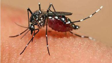 Veja como tratar a febre Chikungunya para diminuir a dor nas articulações 5