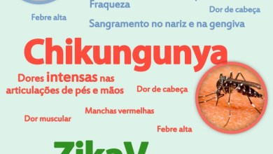Cientistas preveem surto maior de chikungunya no primeiro trimestre de 2016 2