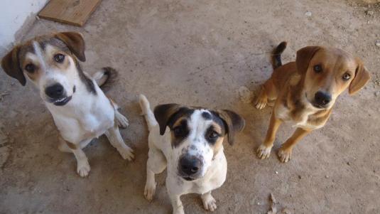 27118_359012260872070_1134017902_n ONG APAM (Associação Protetora dos Animais de Monteiro) realiza campanha de adoção animal
