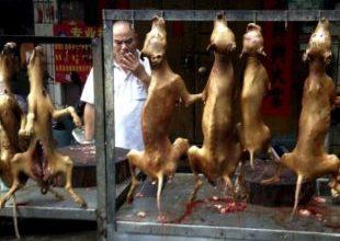 """Começa na China festival """"gastrônomico"""" de carne de cachorro 5"""