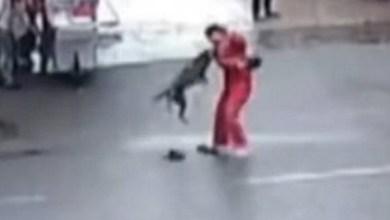 Cão enfurecido ataca 23 pessoas e causa pânico na China 4