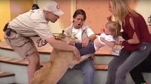 leao-300x167 Leão pula em criança ao vivo em programa na TV. Assista