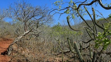 SUMÉ: E-books sobre Bioma Caatinga são lançados por professores da UFCG 6