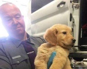 filhotes-1-310x245-300x237 Policiais resgatam mais de 100 filhotes de cachorro após acidente com van