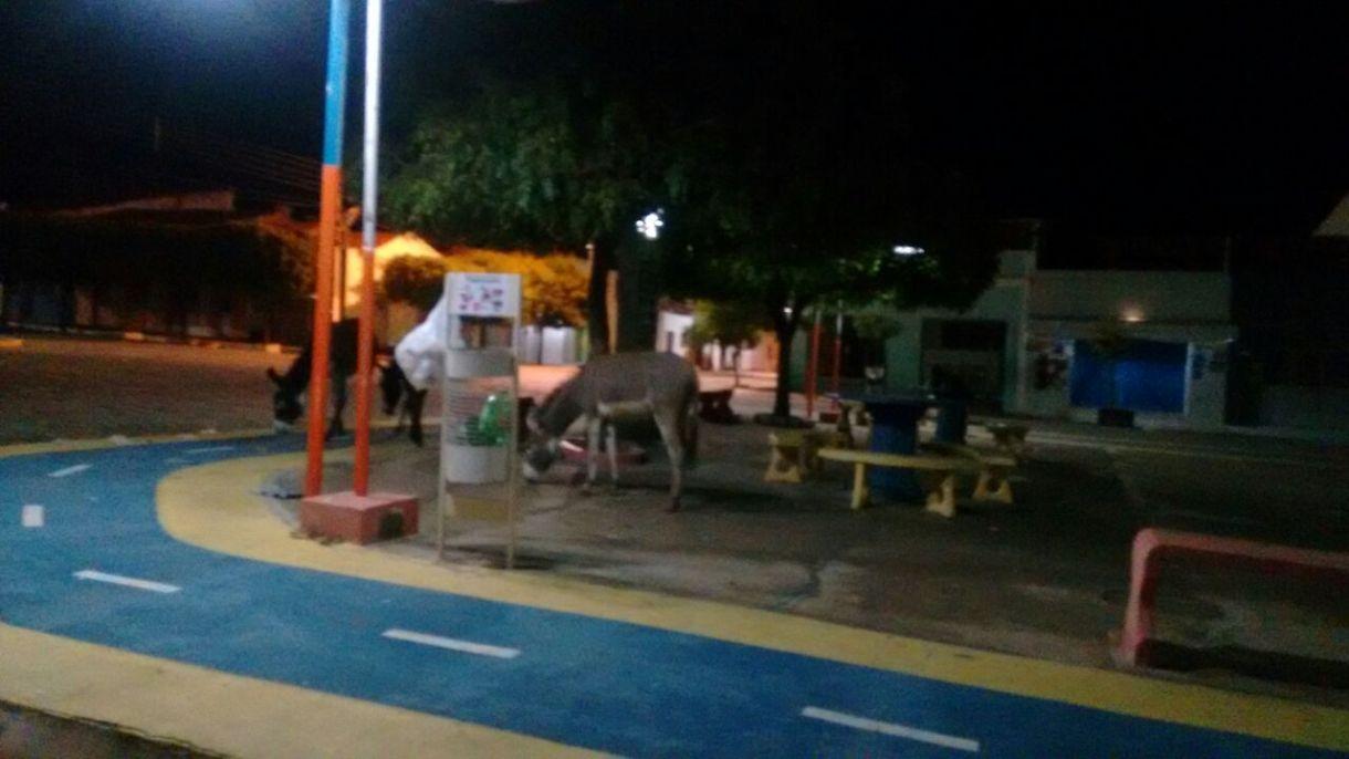 jegue-em-sao-joão-do-tigre Jumentos soltos nas ruas de São João do Tigre causam transtornos e riscos de acidentes à população