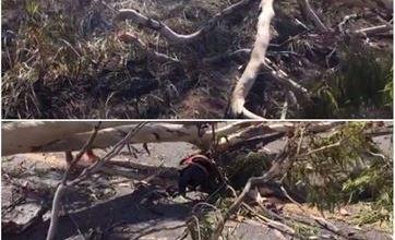 Homem morre ao ser atingido por árvore na PB; nora passa mal ao ver o corpo e morre 3