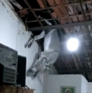 burro-295x300 Jumento voador?: População de Cajazeiras se reúne para tirar jumento de um telhado– VEJA VÍDEO