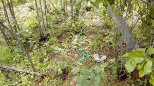 fd08efa3-10f3-4b05-8389-f3878923a20c-1-300x169 Mulher é encontrada morta por enforcamento em Sertania