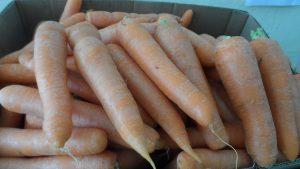 SAM_7032-1-300x169 Verdurão JK em Monteiro:  Frutas e verduras selecionadas diretamente da CEASA