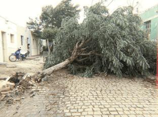 Ventania forte derruba árvores, tetos e provoca estragos na região do Cariri 1