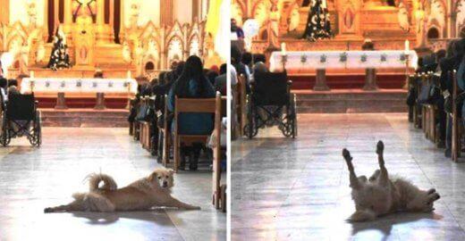 Padre-quer-sacrificar-cadelinha-que-assiste-missa-em-Cajazeiras-520x270 Padre quer sacrificar cadelinha que assiste missa em Cajazeiras