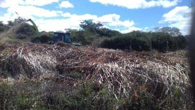 Secretaria de agricultura de Monteiro realiza silagem de mais de 18 mil Kilos no Sítio Jabitacá 8