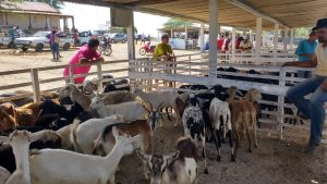 feira_animais_1 Monteirenses agradecem serviços oferecidos pela Prefeitura de Monteiro